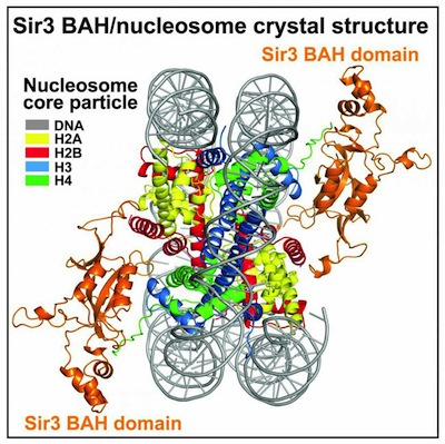 Sir3_crystal_structure